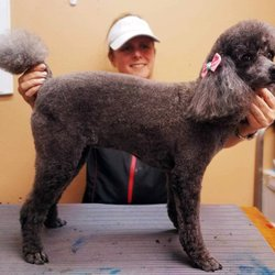 Pet Groomers - Crossroads Veterinary Hospital