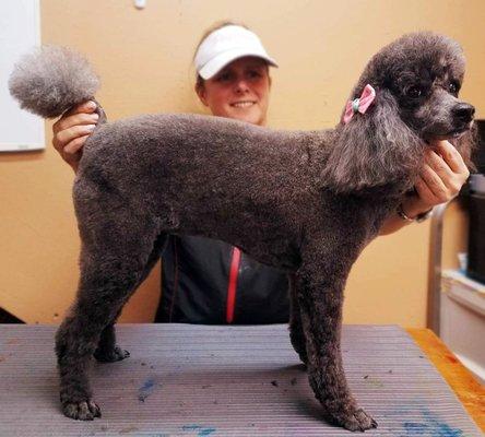Pet Groomers - Pawlished Pets